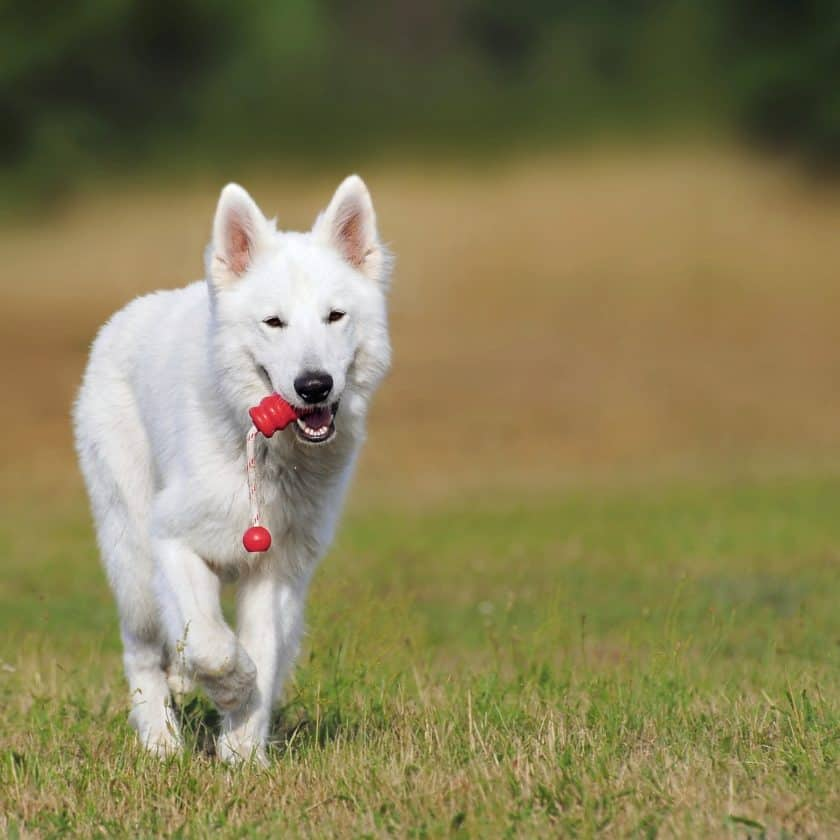 Shell game to boost dog brain