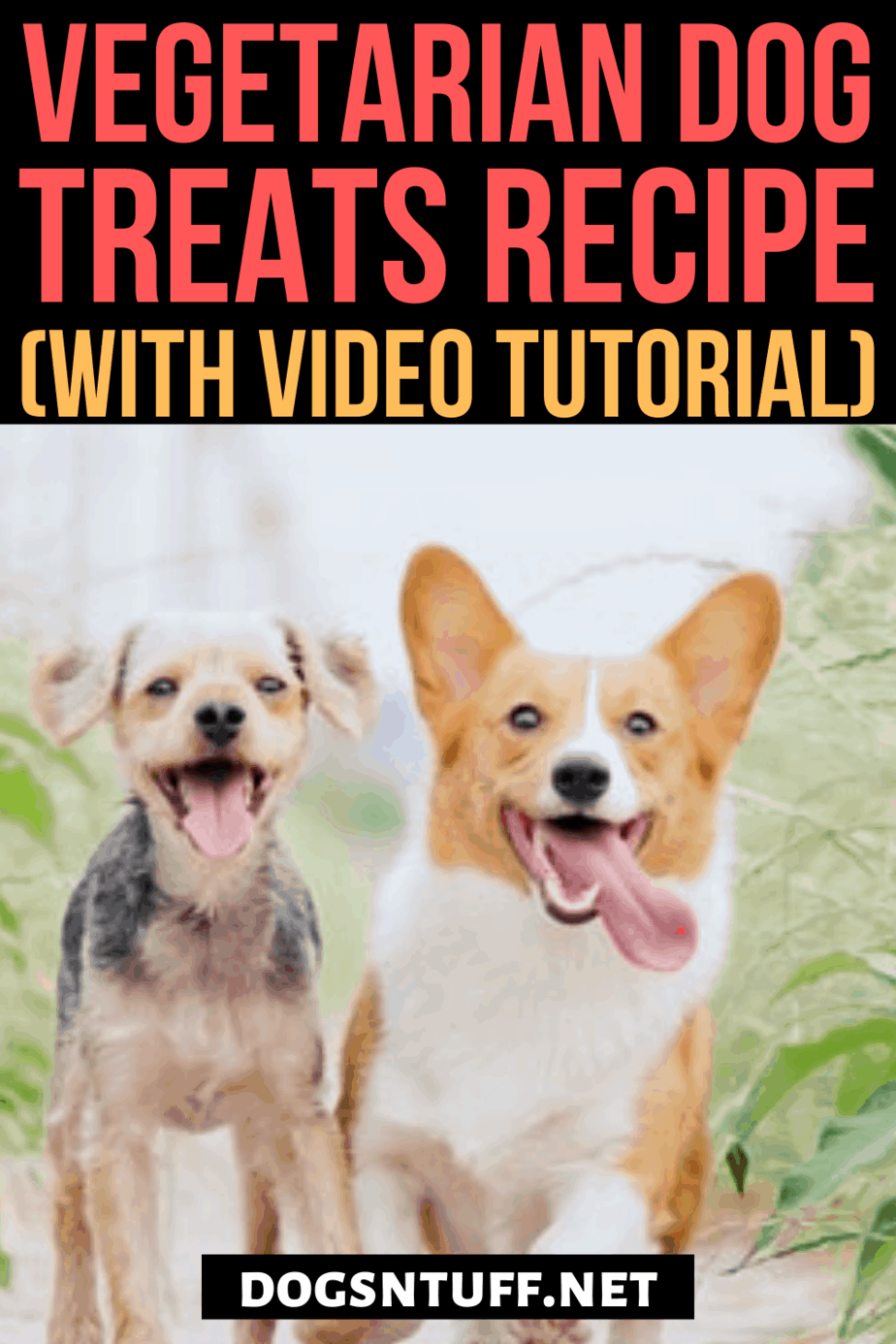Tasty Hypoallergenic Dog Treats for Dogs with Allergies