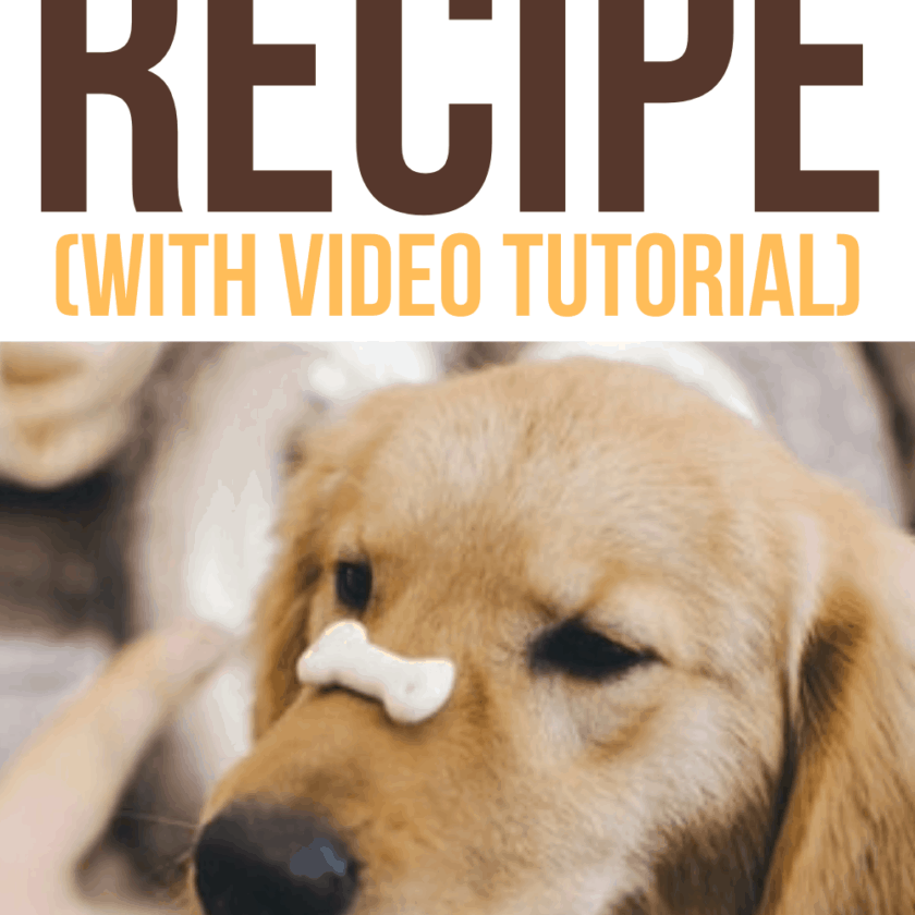 Easy Homemade Hypoallergenic Dog Treats Recipe
