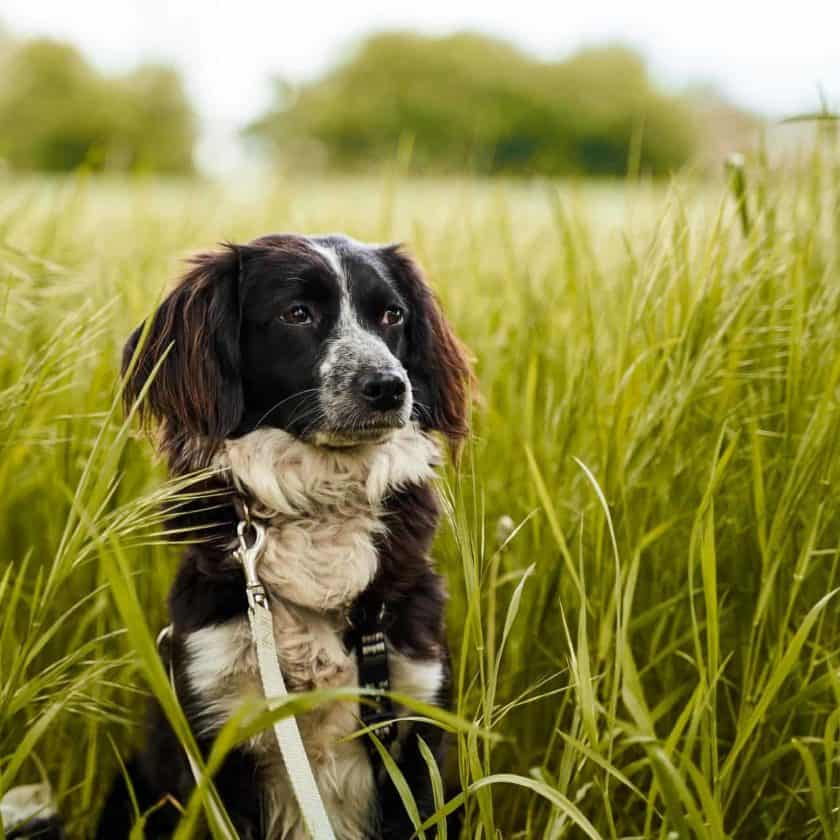 What if the grass eating made my dog sick?