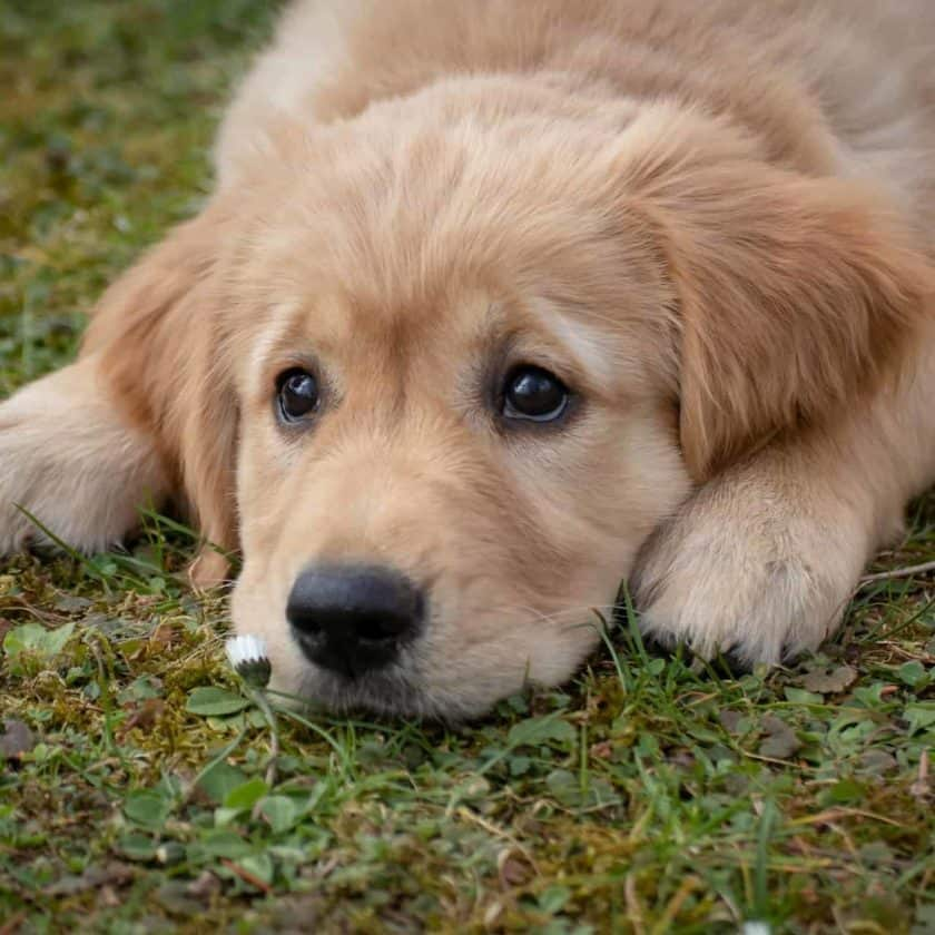 My dog is eating grass: Should I be worried about it?
