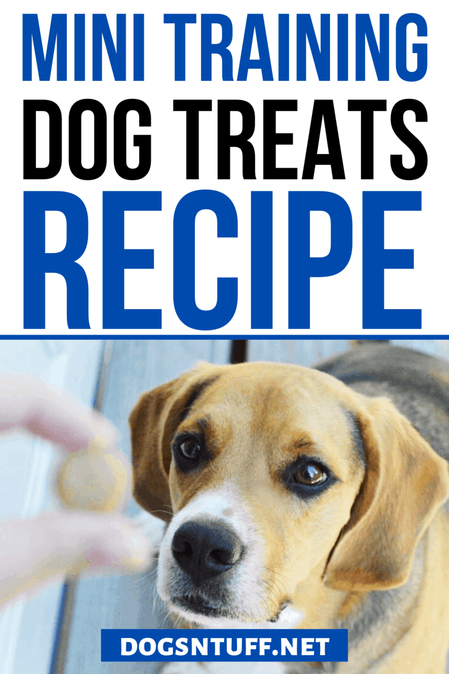 Is Whole-wheat Flour Good for Dogs?
