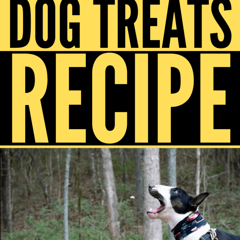 How to make DIY Dog Training Mini Treats?