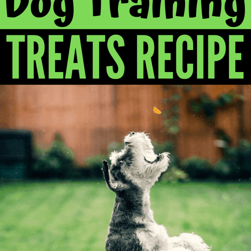 home made gummy dog training treats recipe