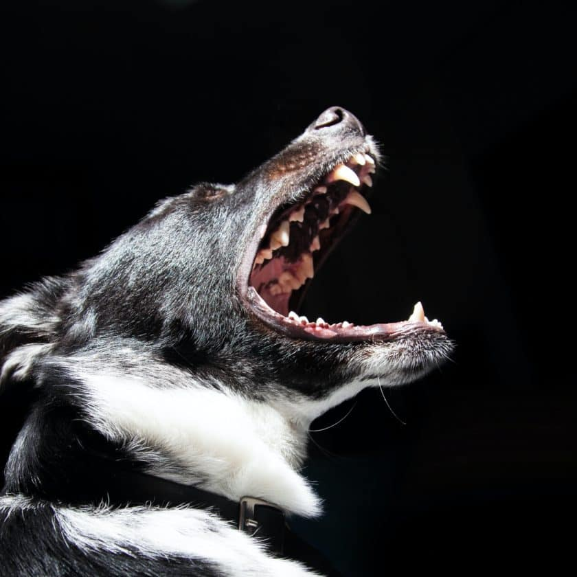 How to Get my Dog to Stop Barking at Night