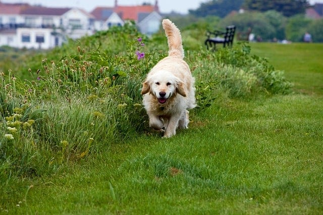 Walking is one of the best exercises for dogs