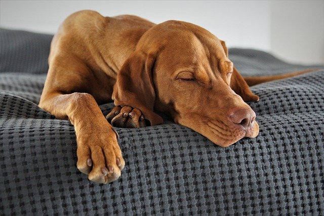 How To Tell If A Dog is Having A Seizure While Sleeping